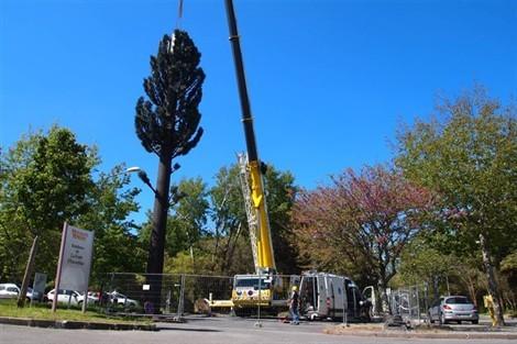 L'antenne-relais en forme d'arbre a été installée à l'aide d'une grue. Ouest France.