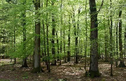 ETUDE néerlandaise : Le Wi-Fi tuerait les arbres... - Nov. 2010