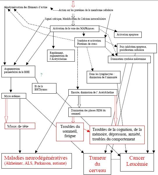Résumé des mécanismes des champs électromagnétiques - CSIF CEM