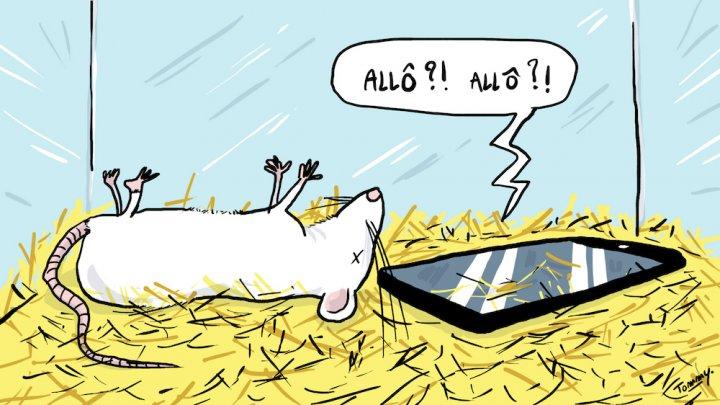 La France s'apprête à déployer la 5G, qui repose en partie sur l'utilisation d'ondes à très haute fréquence. Aucune étude épidémiologique n'ayant été faite, scientifiques, médecins, et jusqu'aux services de l'État s'alarment.
