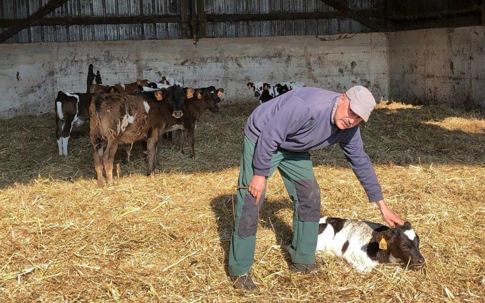 À Allineuc (Côtes-d'Armor), l'éleveur Stéphane Le Béchec a perdu 200 vaches et veaux de manière inexpliquée en trois ans. LP/Solenne Durox