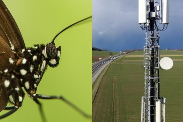 Les ondes plus puissantes de la téléphonie mobile ont une influence sur le métabolisme fragile des insectes. Image: iStock¨/Keystone
