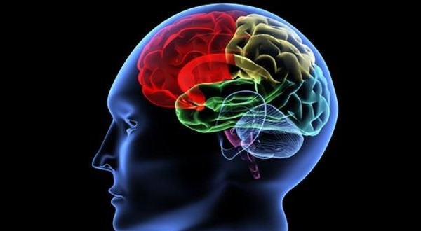 Ondes : « le cerveau vieillira plus vite » - Enviro2B - 10/02/2014