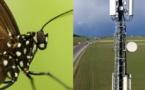 La 5G fait chauffer les antennes des insectes - lematin.ch - 13/05/2019