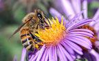 La destruction de la nature par l'« électrosmog » - Des abeilles, des oiseaux et des hommes - Ulrich Warnke - 01/11/2007
