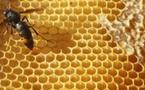 """""""Crises sanitaires : les ONG interpellent les candidats à l'Elysée"""" - La Tribune - 16/04/2012"""