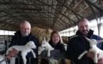 Charente-Maritime : leurs chèvres décimées, ils soupçonnent les ondes d'Enedis - sudouest.fr - 13/12/2019