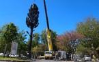 La Baule : une antenne-relais en forme d'arbre ! - Ouest France - 16/05/2012
